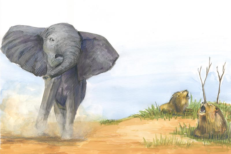 Bobo, der kleine Elefant - Illustration